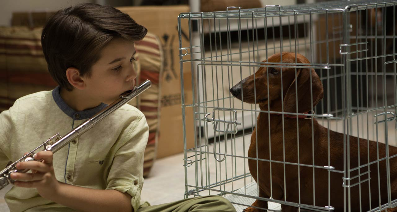 Wiener-Dog-Todd-Solondz-Eigauk-film-news-for-Japanese-Audience-in-uk-Eiga-UK
